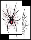 Spider web tattoo design ideas here!