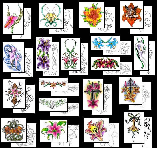 Choose your beautiful Lily Tattoo design from the many choices at