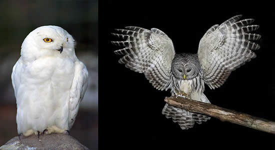 Owl tattoos - what do they mean? Tattoos Designs & Symbols - tattoo ...