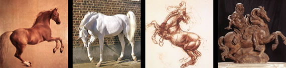 images of horses