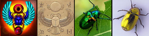 Scarab images